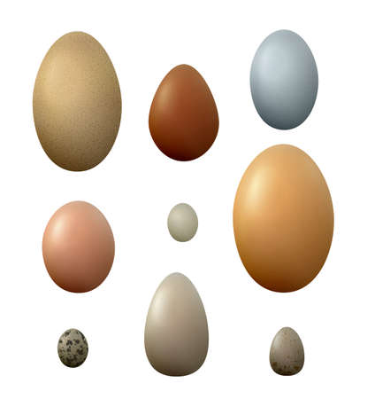 Set of different birds eggs on the white background.