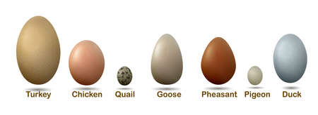 Set of different birds eggs with label.