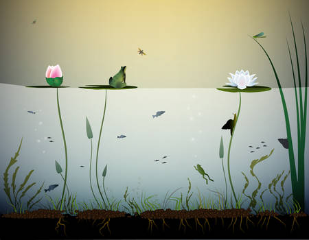 pond life, under the water, rivers animal, shadows, black and white, Vector illustration. 向量圖像