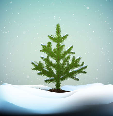 small Christmas trees or young fir tree growing on soil in winter snowing weather, vector