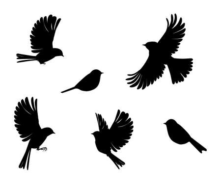 slhouette of sparrow or titmouse in different poses, black and white vector
