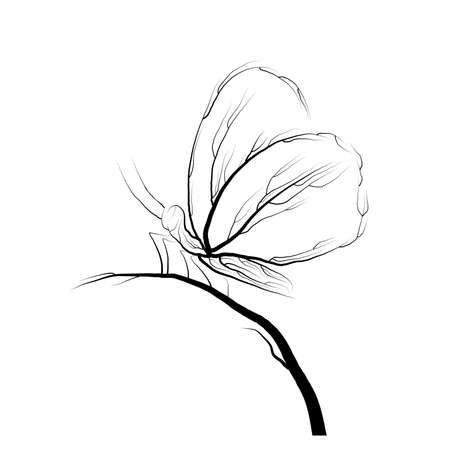 butterfly look like tree branches on the white background vector