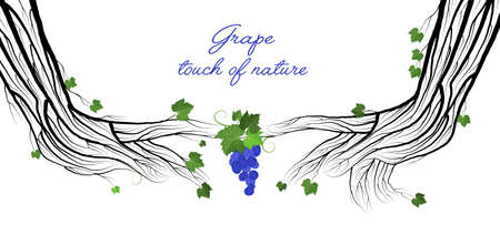 secret of wine concept, two human hand looks like grape branches on the white background, grape touch of nature concept, eco wine idea