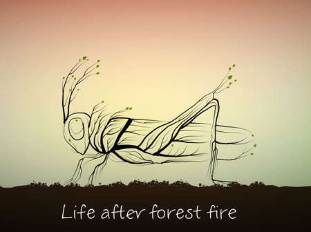 nature recovery after the fire, tree looks like grasshopper, life after the forest fire concept,