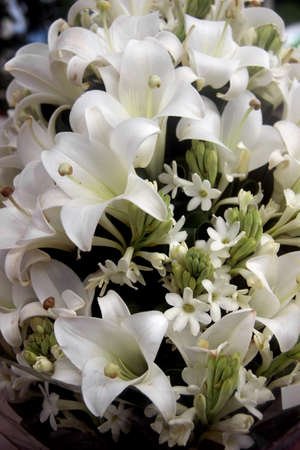 virginity: WHITE LILY IS SYMBOL OF VIRGINITY,PURITY AND INNOCENCE.