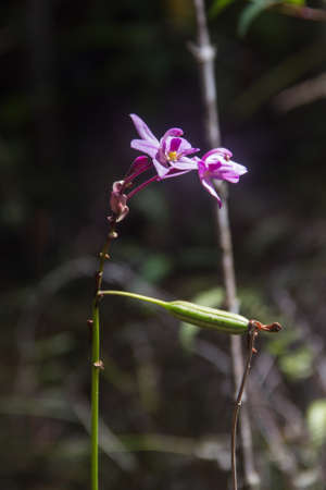 THIS IS AN  ENDEMIC PLANT OF BARACOA.ITS SCIENTIFIC NAME IS BOURRERIA MOENSIS