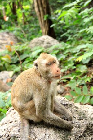 sleepy monkey in forest