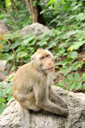 Thai monkey in forest Stock Photo