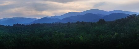 oil palm: morning at oil palm plantation with layer mountain as background