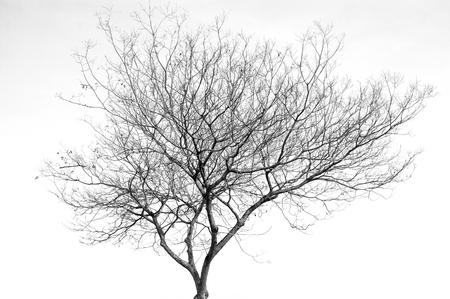 tree branches silhouette isolated on white background