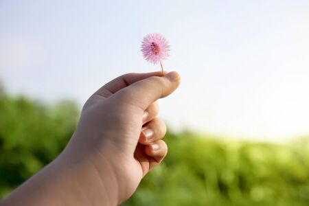 Childs hand Holding small flowers in green background