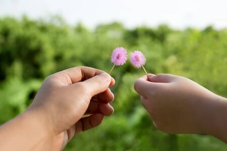 Adult hand and child hand Holding small flowers in green background