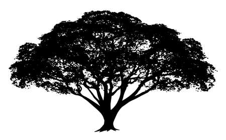 Big tree silhouette isolated on white background