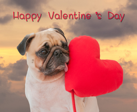 carlin: Happy Valentines day. Lonely cute Pug with heart on twilight sky background.