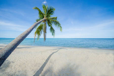 seaside: Summer beach with the coconut tree with its shadow in focus at the seaside. vacation mood concept.