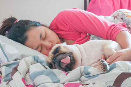 pug: Asian Woman and her ugly pug dog sleep in the bed Stock Photo