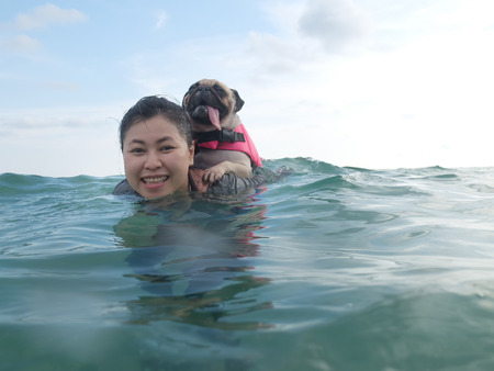 trat: Cute dog puppy pug fear and afraid water ride on owner people woman back in summer beach, Koh Kood , Thailand. (Kood Island, Trat province). Summer background. Summer concept. Stock Photo