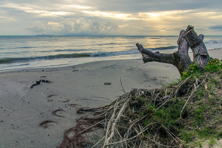 filipino people: Sunset over the sea. Dry tree and root on the foreground