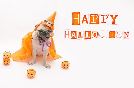 Cute puppy pug dog wearing a Halloween witch hat. Stock Photo