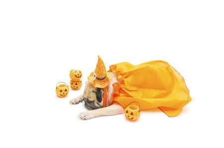perros vestidos: lindo perro pug resto sueño con el traje del día del feliz Halloween y calabaza