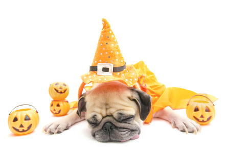 Cute pug dog sleep rest with Happy Halloween day costume and pumpkin