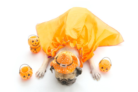 Pug dog sleeping on the ground with funny halloween costume