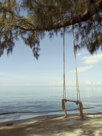 Wooden swing hanging from a tree on the beach in the morning with sun light