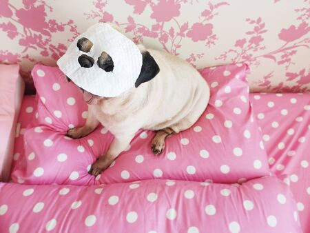 Funny cute pug dog relaxing with beauty mask in spa wellness at home 写真素材