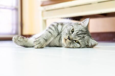 Cat thai persian sleeping rest happily on the floor in the lazy time Reklamní fotografie - 131470827