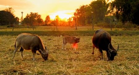 pastoral: farm, pastoral Stock Photo