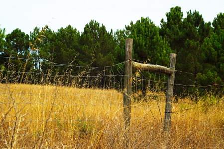cattle grid: Wired fence on a golden field and a green background Stock Photo