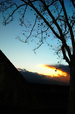 Photo of a silhouette tree taken in 2006 in the village of Almeirim, centre of Portugal Reklamní fotografie