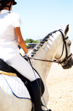 Riding a white gelded horse in a summer dressage competition Reklamní fotografie