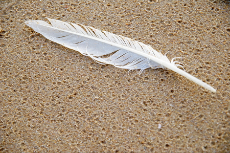 White sea gull feather in the sand and washed by the waves Reklamní fotografie