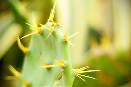 cactus flower: Close up of a cactus with long thorns and blurred bokeh green background Stock Photo