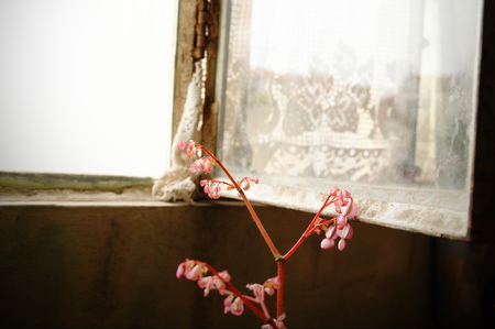 Old abandoned house metal and glass open window with a little pink flower next to it