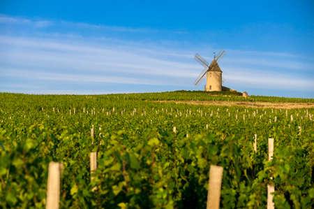 vi�edo: Mill en vi�edos de Beaujolais Foto de archivo