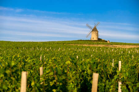 wine road: Mill into vineyards  Beaujolais  Stock Photo