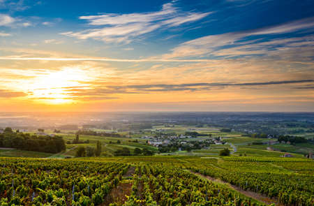 Sunrise at Beaujolais vineyard Stock Photo