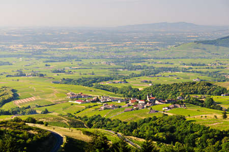 rhone: Vineyards of Beaujolais, Rhone, France