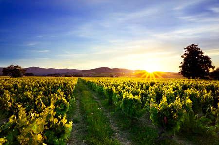 ブドウ畑やボジョレー、フランスの山に沈む夕日