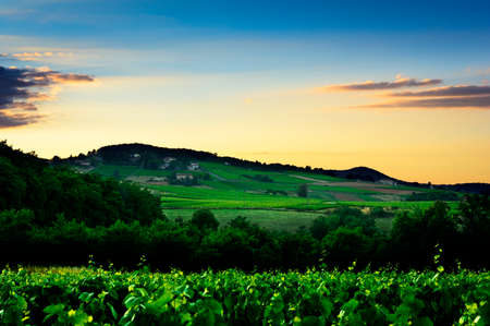 over hill: Sunset lights over hill and vineyards of Beaujolais land in France