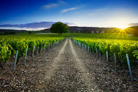 grape fruit: Sunset time over vineyards of Frontenas village at Beaujolais land in France Stock Photo