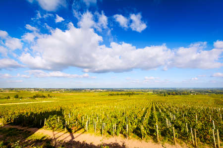 crus: Vineyards of Beaujolais during a sunny day, France