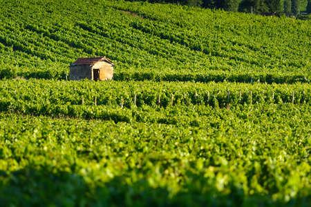 Hut in vineyards in Burgundy Фото со стока