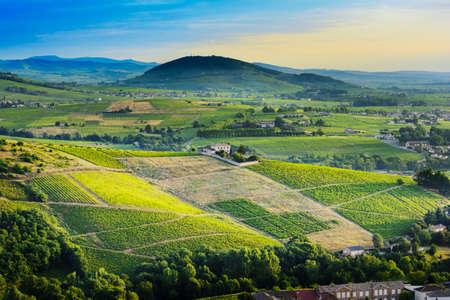 Brouilly の丘やブドウ園フランス ボジョレー地の朝の光に