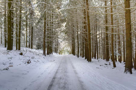 ballad: Snowed road in forest during winter