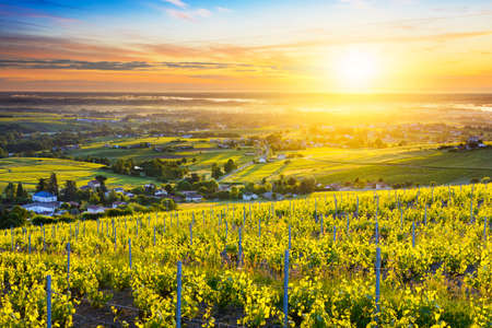 First lights of sunrise over vineyards and landscape of Beaujolais in France Stock fotó