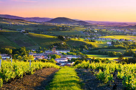 ボージョレ地日の出風景や Brouilly の丘