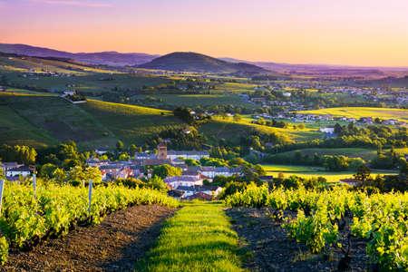 Landschap en Brouilly heuvel bij zonsopgang in Beaujolais land Stockfoto